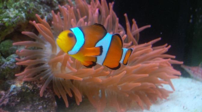 Nemo gefunden!