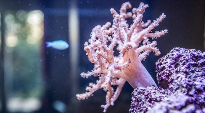 Pimp my Aquarium