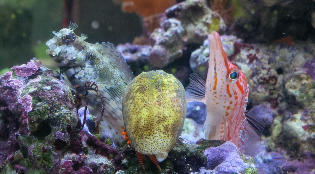 Mein meerwasser aquarium meerwasser aquarium f r einsteiger for Aquarium einsteiger