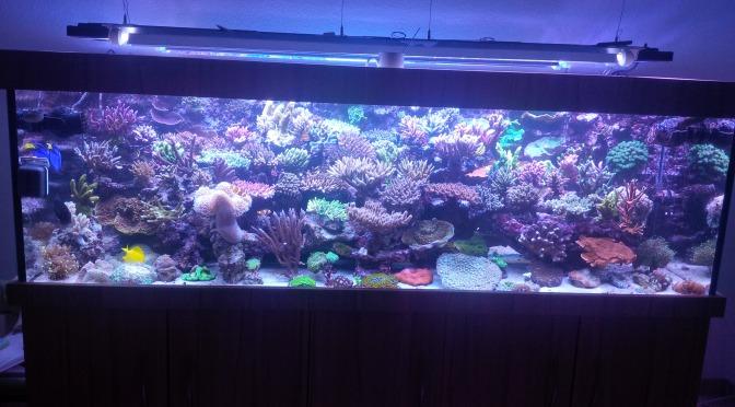 Korallen wohin das Auge sieht