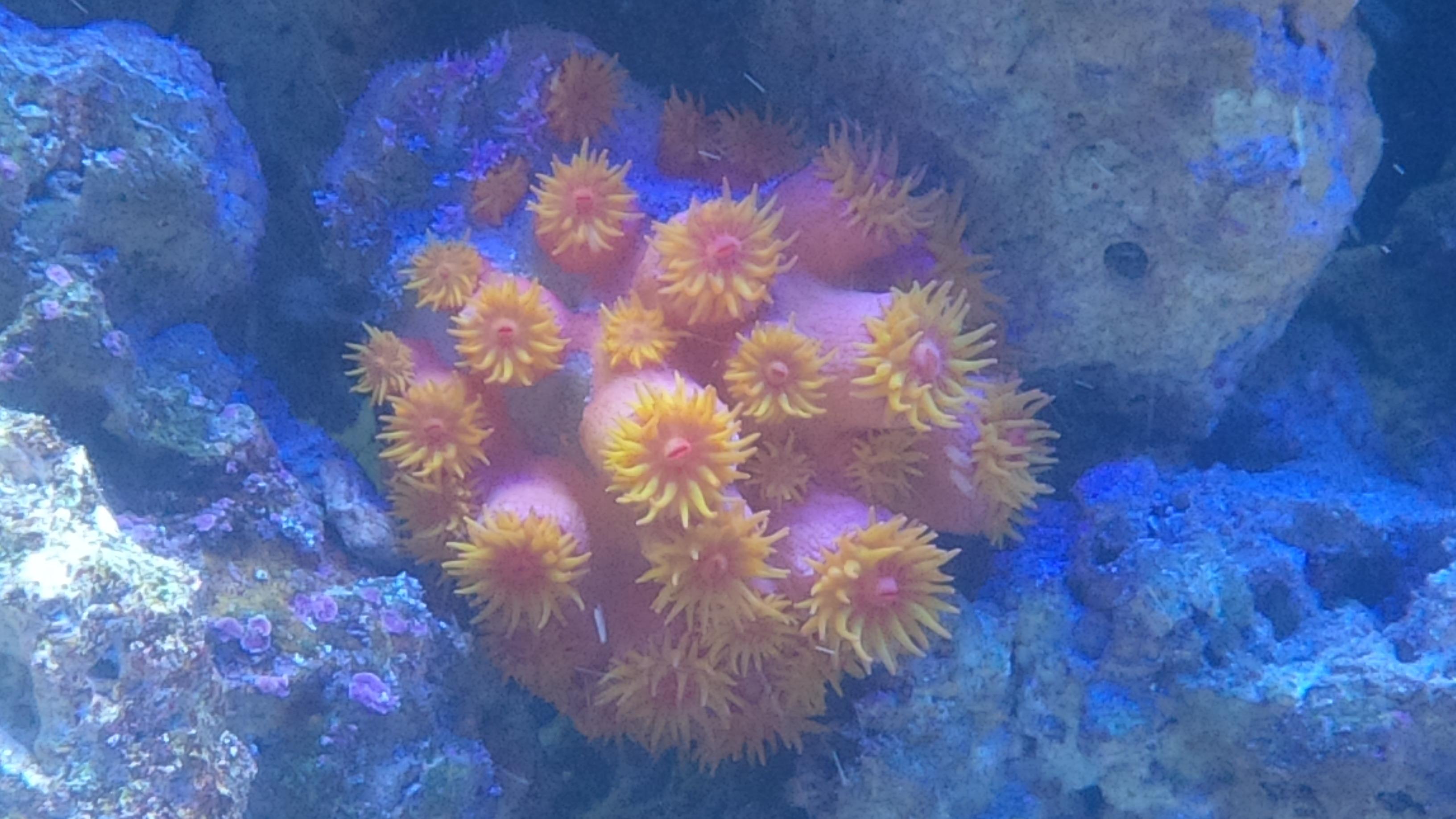 Wasserwechsel mein meerwasser aquarium for Aquarium wasserwechsel